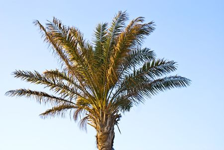 Leaves of a palm tree on a blue background Stock Photo - 7057694