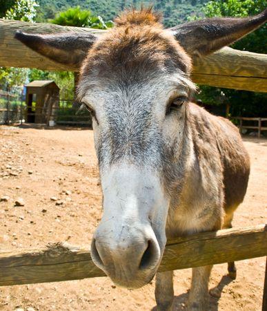Funny loooking donkey looking fopr food photo
