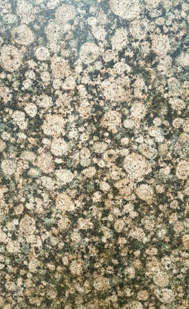 Brown and Black Granite for Backgrounds, Backdrops, or Copy Space