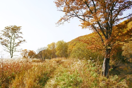 windless: Beautiful autumn landscape Stock Photo