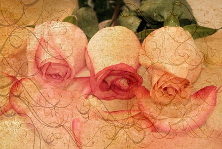 vintage roses:  Beautiful and elegant roses in vintage style for design