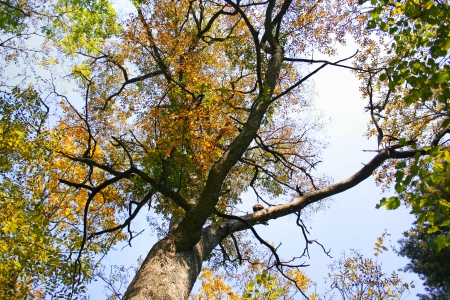 windless: Beautiful autumn treetop  Autumn leaves
