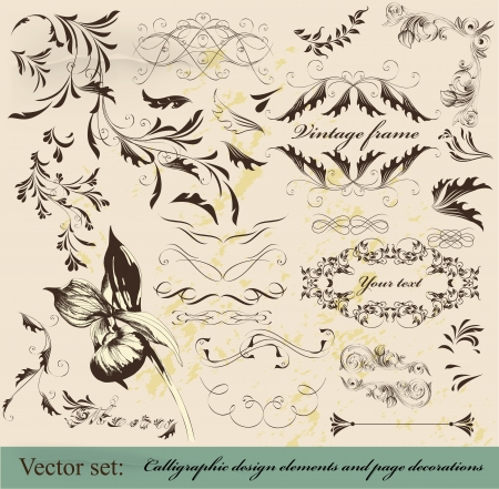 Decorative elements for elegant design  Vector