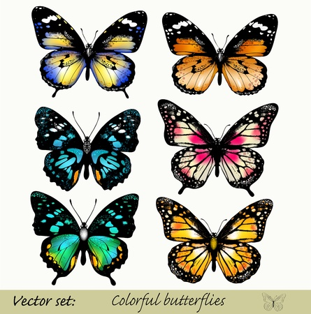 Set of realistic butterflies Stock Vector - 16162697