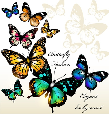 colorful butterfly:  illustration with butterflies