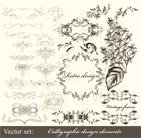 ornamental scroll: Decorative elements for elegant design  Calligraphic vector