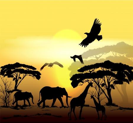 morning sunrise: Vector savanna scene