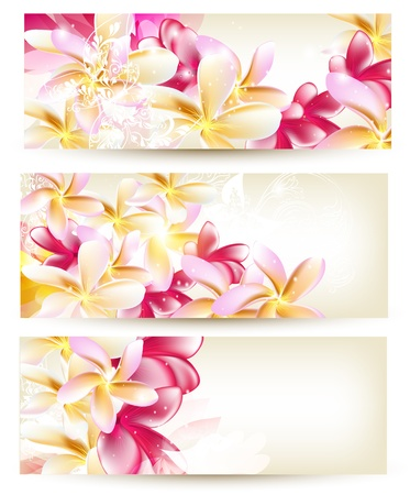 Vector set of Floral cards with pink gardenia flowers Illustration