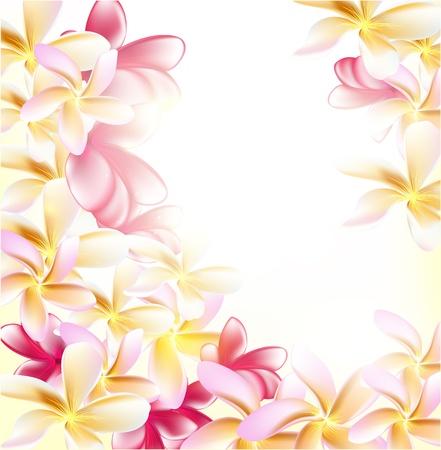 Pink gardenia flowers on white background for design