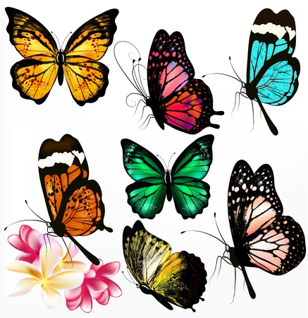 Set of realistic colorful vector butterflies for design Stock Vector - 18123038