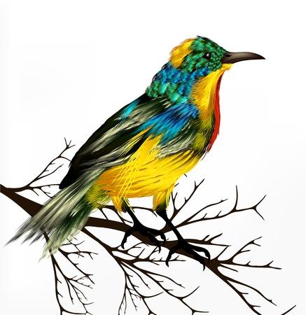 helechos: Primavera de vectores de fondo con el pájaro tropical vector realista