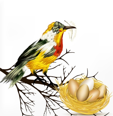 birds nest: Spring Easter vector background with realistic  vector bird and nest Illustration