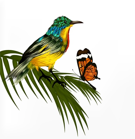 Spring vector background with realistic  tropical vector bird  Vector