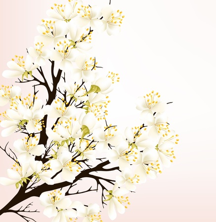Spring vector background with detailed blossoming branch of cherry Stock Vector - 18255413