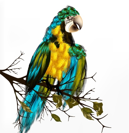 ara: vector background with realistic  parrot Ara bird  sit on branch