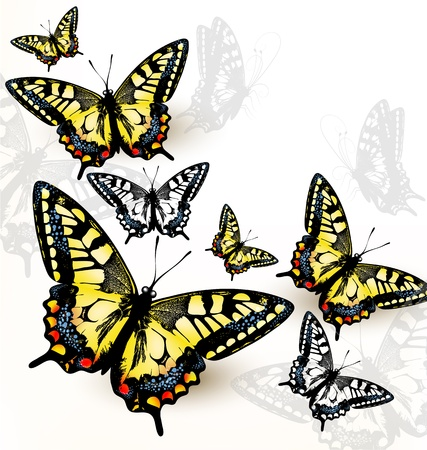 Vector illustration with butterflies  for design Stock Vector - 18569949