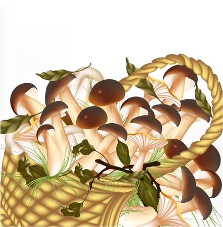 forest mushrooms in basket on white background Vector