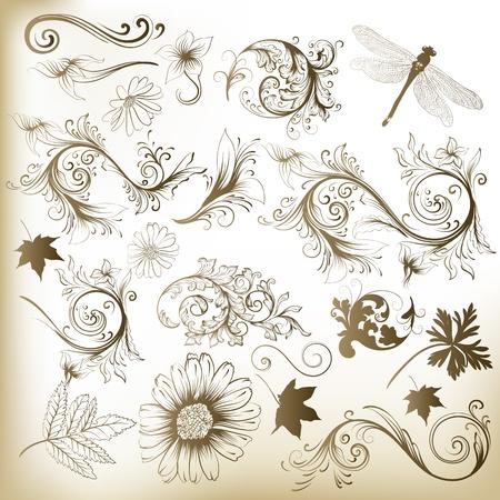 bordes decorativos: Conjunto de ornamentos remolino y hojas para el diseño