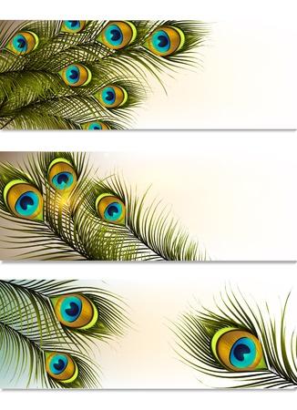 pavo real: Vector conjunto de tarjetas de visita con helechos pavo real para el dise�o Vectores