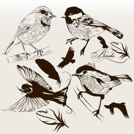 Vector set of detailed hand drawn birds for design Stock Vector - 19559937