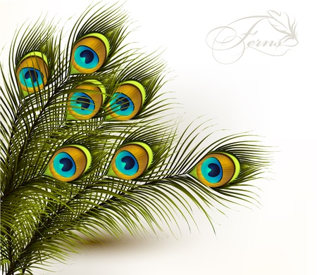 Cute  vector background with green peacock ferns on white Vector