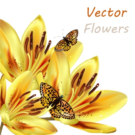 Vector yellow orange lily isolated on white for design Vector