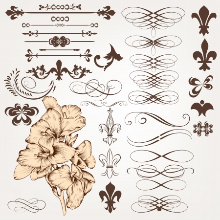 scroll border: Vector set of calligraphic elements for design. Calligraphic vector