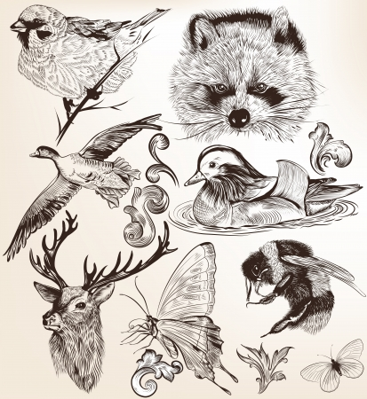 bees: Collection  of high detailed vector animals for design