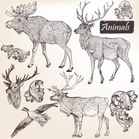 oiseau dessin: Collection d'animaux vecteurs de haute d�taill�es pour la conception Illustration