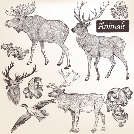 animal fauna: Collection  of high detailed vector animals for design
