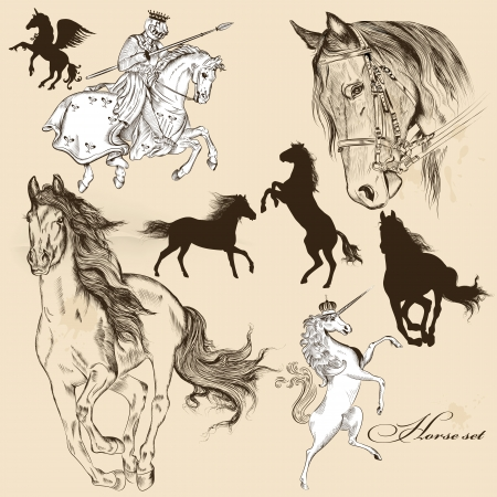 horses: Vector set of detailed hand drawn horses for design