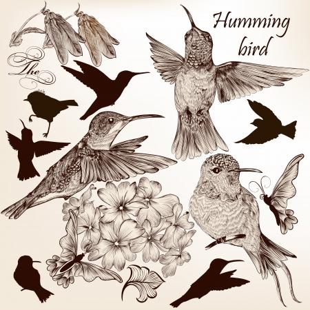 birds silhouette: Vector set of detailed hand drawn birds for design