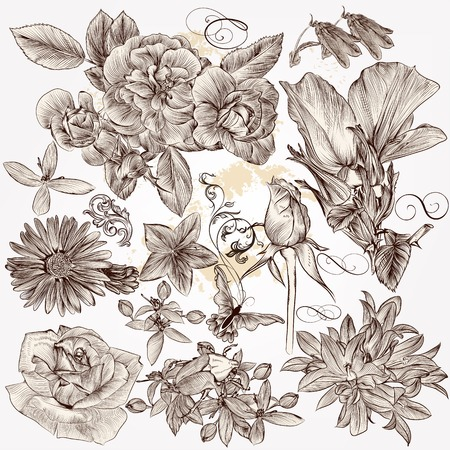 victorian scroll: Collection  of high detailed vector flowers for design Illustration