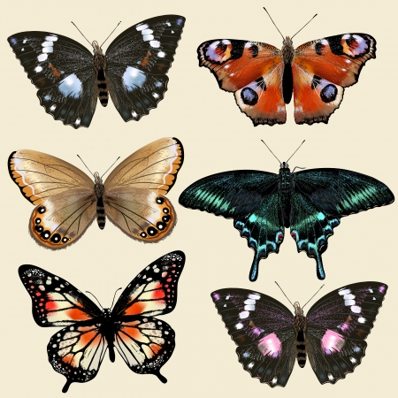 Collection of vector colorful realistic butterflies for design Vector