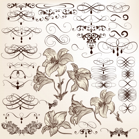 lily flowers set: Vector set of calligraphic elements for design  Calligraphic vector