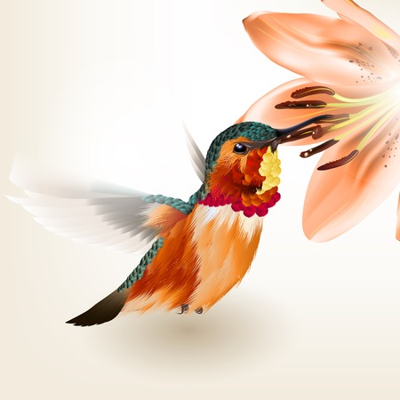 Vector illustration with realistic humming bird for design Vector