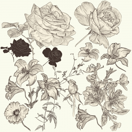 Collection  of high detailed vector flowers for design Vector