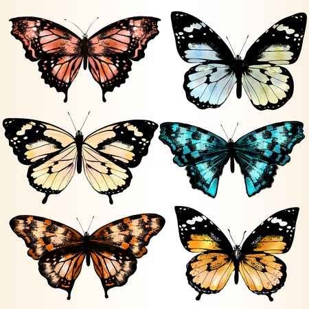 Illustration with  realistic vector butterflies Stok Fotoğraf - 23900685