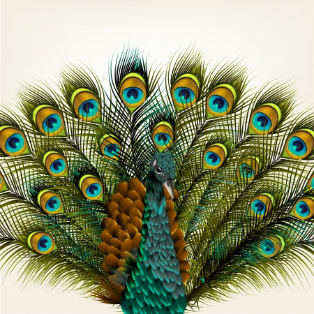 Cute  vector background with green peacock on white Vector