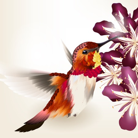 Vector illustration avec réaliste colibri pour la conception
