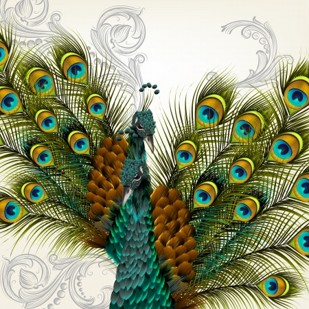 Cute  vector background with green peacock on white 일러스트