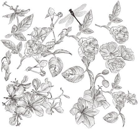 設計のための高詳細なベクトル花のコレクション  イラスト・ベクター素材