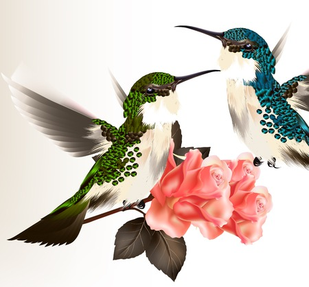 Vector illustration with  couple of realistic humming birds for design Vector