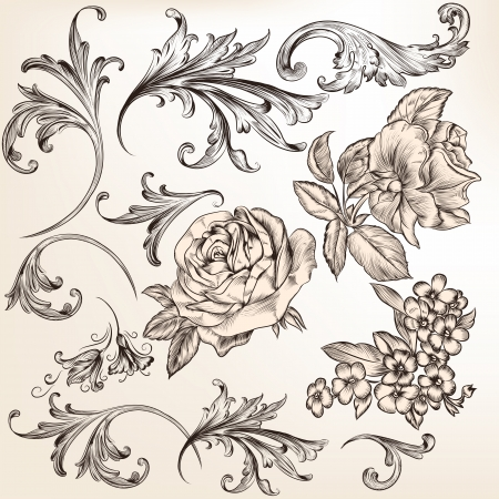 swirl floral: Vector set of swirl and floral elements for design  Calligraphic vector Illustration