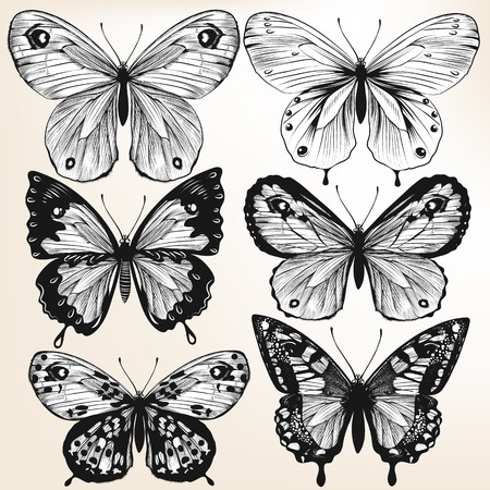 monochromic: Illustration with  detailed hand drawn  vector butterflies Illustration