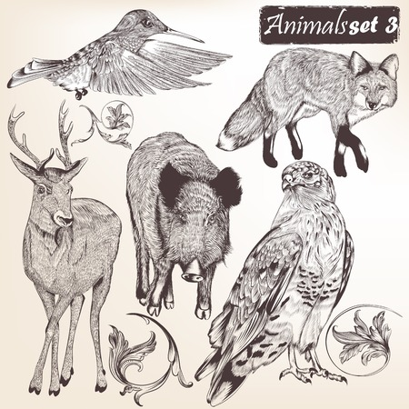 wild nature wood:  Collection  of high detailed vector animals for design
