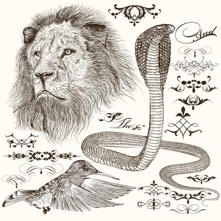 serpiente cobra: Vector conjunto de dibujado a mano animales detalladas con elementos caligráficos