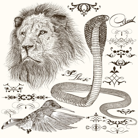 lion drawing: Vector set of hand drawn detailed animals with calligraphic elements Illustration