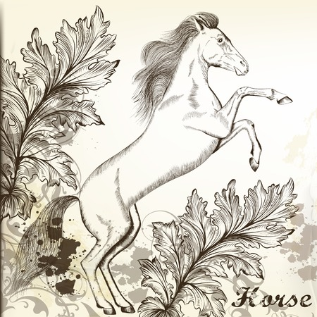 horse drawn: Vector illustration with hand drawn horse