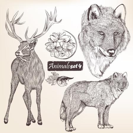 deers: Colecci�n de animales vectoriales detalladas altos para el dise�o Vectores